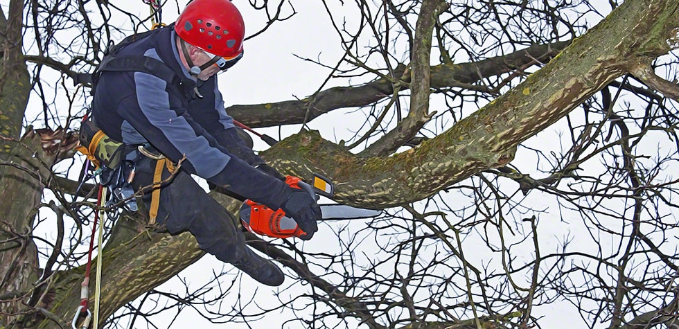 Why should you hire a tree removal agency